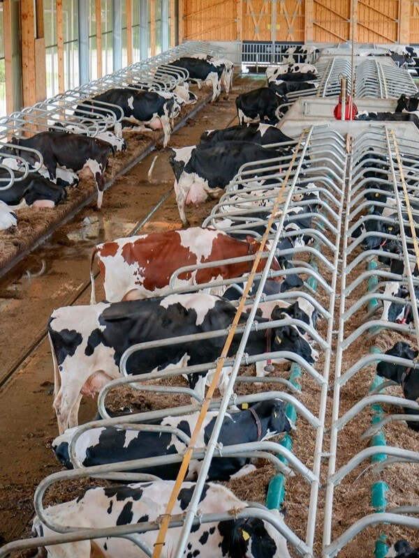hale rolnicze -  hale_rolnicze